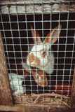 Зайчики в клетке Стоковая Фотография