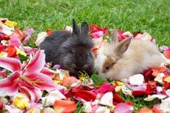 Зайчики на лепестках розы стоковое фото