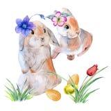 Зайчики пасхи в цветках с пасхальными яйцами Изолировано на предпосылке Стоковая Фотография RF