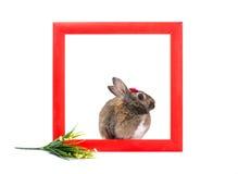 Зайчик внутри красной деревянной рамки Стоковые Фото