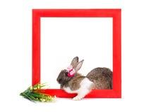 Зайчик внутри красной деревянной рамки Стоковые Изображения