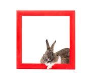 Зайчик внутри красной деревянной рамки Стоковое Изображение RF