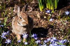 Зайчик в саде Стоковые Изображения RF