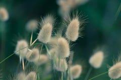 Зайчик замыкает траву стоковое изображение