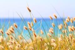 Зайчик замыкает траву Стоковая Фотография RF