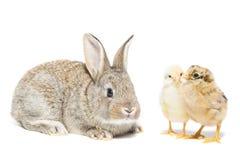 Зайчик и цыпленок стоковое фото rf