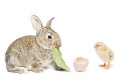 Зайчик и цыпленок стоковое фото