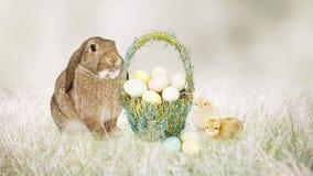 Зайчик и цыпленоки пасхи с корзиной яичек Стоковое фото RF