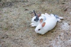 Зайчик кроликов в саде Стоковая Фотография