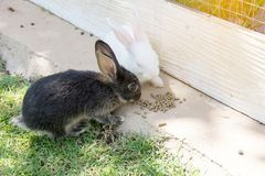 Зайчик кроликов в саде Стоковые Изображения