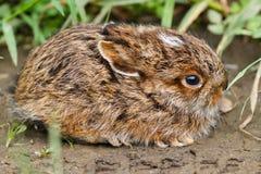 Зайчик младенца кролика стоковая фотография rf
