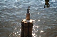 Зайчик от крепости Питера и Пола Стоковые Фото