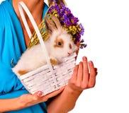 Зайчик пасхального яйца на руках и цветках женщины в корзине Стоковое Изображение RF