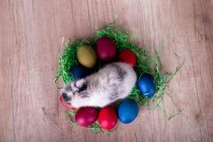 Зайчик пасхи в гнезде Стоковое Изображение