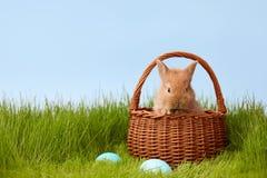 Зайчик пасхи в корзине на лужайке травы Стоковая Фотография