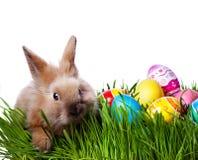 Зайчик пасхи и пасхальные яйца стоковое фото