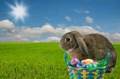 Зайчик пасхи и пасхальные яйца Стоковое Изображение
