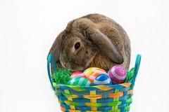 Зайчик пасхи и пасхальные яйца Стоковая Фотография