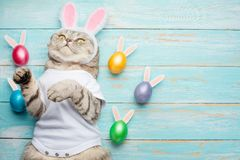 Зайчик пасхи, кот с ушами зайчика и пасха покрасили с яйцами и ушами Пасха и праздник стоковые фотографии rf