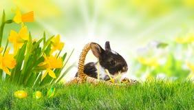 Зайчик пасхи на луге пасхи, пасхальных яйцах Стоковое Изображение