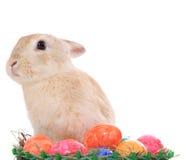 Зайчик пасхи принося пасхальные яйца Стоковые Изображения RF