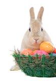 Зайчик пасхи рядом с пасхальным яйцом Стоковое Изображение
