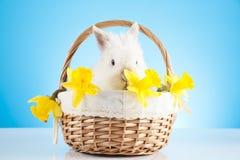 Зайчик пасхи сидя в плетеной корзине украшенной с daffodils Стоковая Фотография RF