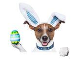 Зайчик пасхи собаки Стоковое Изображение RF