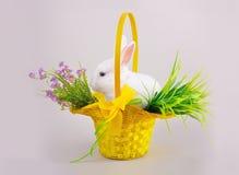 Пушистый белый зайчик в корзине с цветками Стоковое Изображение