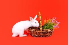 Белые зайчик и корзина цветков на красной предпосылке Стоковая Фотография