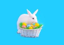 Белые зайчик и корзина яичек на голубой предпосылке Стоковое Изображение RF