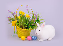 Белый зайчик, корзина с цветками и покрашенные яичка Стоковые Изображения