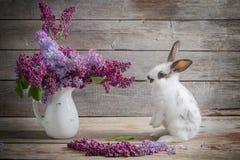 Зайчик пасхи с сиренью Стоковые Фото