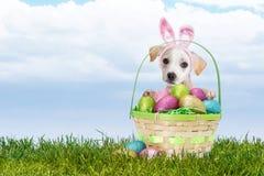 Зайчик пасхи щенка с корзиной Стоковые Изображения RF
