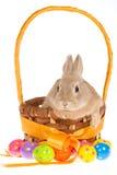 Зайчик с пасхальными яйцами на белой предпосылке стоковое фото