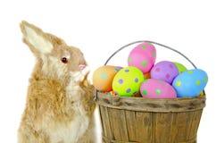 зайчик с пасхальными яйцами точки польки стоковые изображения rf