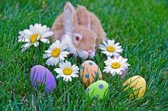 Зайчик с пасхальными яйцами стоковое изображение rf