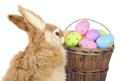 Зайчик с пасхальными яйцами стоковая фотография rf