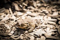 Закамуфлированная лягушка стоковые изображения