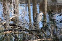 Закамуфлированная птица Стоковые Фото