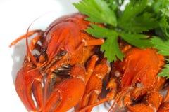 2 закипели crayfishs на предпосылке изолята белой с зеленым цветом Стоковое Изображение RF