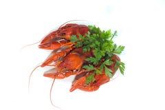 3 закипели crayfishs на предпосылке изолята белой с зеленым цветом Стоковая Фотография