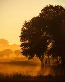 заколдованное утро Стоковая Фотография RF