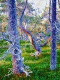 Заколдованный лес, волшебная древесина, химера завода, прихоть бесплатная иллюстрация