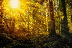 Заколдованный лес с мшистыми утесами и сверкная светами иллюстрация штока
