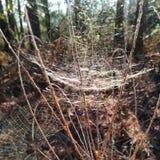 Заколдовывать солнечности природы травы webcob сети Spiderweb волшебный стоковое фото