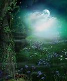 Заколдовывая лес феи раскрывая вечером и полнолуние стоковое изображение