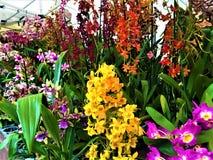 Заколдовывая орхидеи, красота, природа и волшебство стоковые изображения
