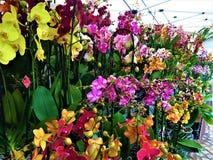 Заколдовывая орхидеи, красота, природа и волшебство стоковые изображения rf