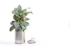 Законсервированная яблоня Стоковая Фотография RF